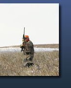 Pheasant Hunting in Webster, SD